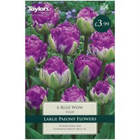 Taylors Bulbs Tulip Blue Wow - Pack of 6 (TP2015)