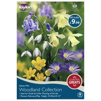 Taylors Bulbs Woodland Collection - Pack of 60 (AV605)
