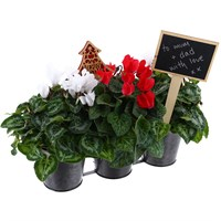 Triple Metal Christmas Cyclamen Houseplant Planter with Handles - 10cm - Christmas Plant Gift