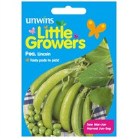Unwins Seeds Little Growers Pea Lincoln (30510018) Seeds for Kids