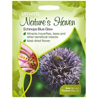 Unwins Seeds Natures Haven Echinops Blue Glow (30210453) Flower Seeds