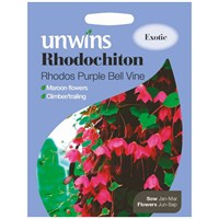 Unwins Seeds Rhodochiton Rhodos Purple Bell Vine (30210308) Flower Seeds