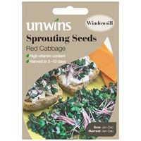 Unwins Seeds Sprouting Seeds Red Cabbage (30310215) Vegetable Seeds