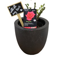 Valentine's Day Plant All My Loving Rose In Black Resin Pot Gift