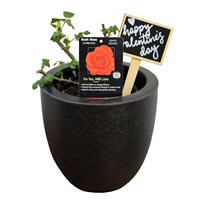 Valentine's Day Plant For You With Love Rose In Black Resin Pot Gift