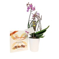 Orchid Purple (Wild) Houseplant & Chocolate Gift Set