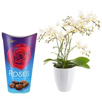 Orchid White (Wild) Houseplant & Chocolate Gift Set