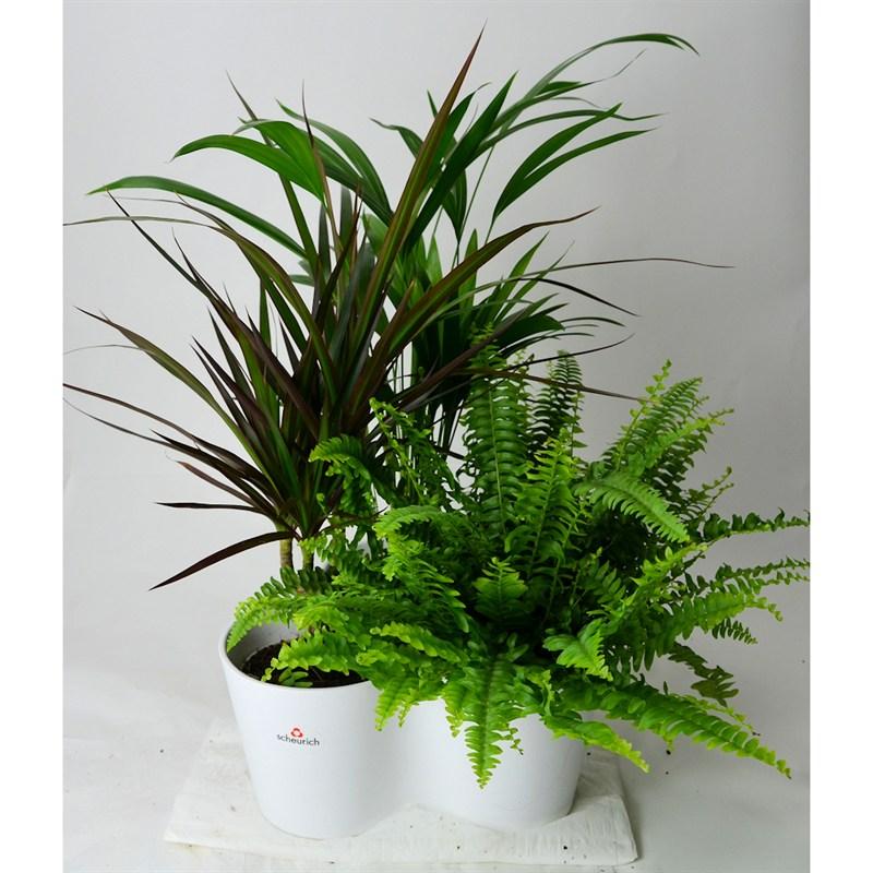 Foliage House Plant Triple Planter with 12cm Pots - White