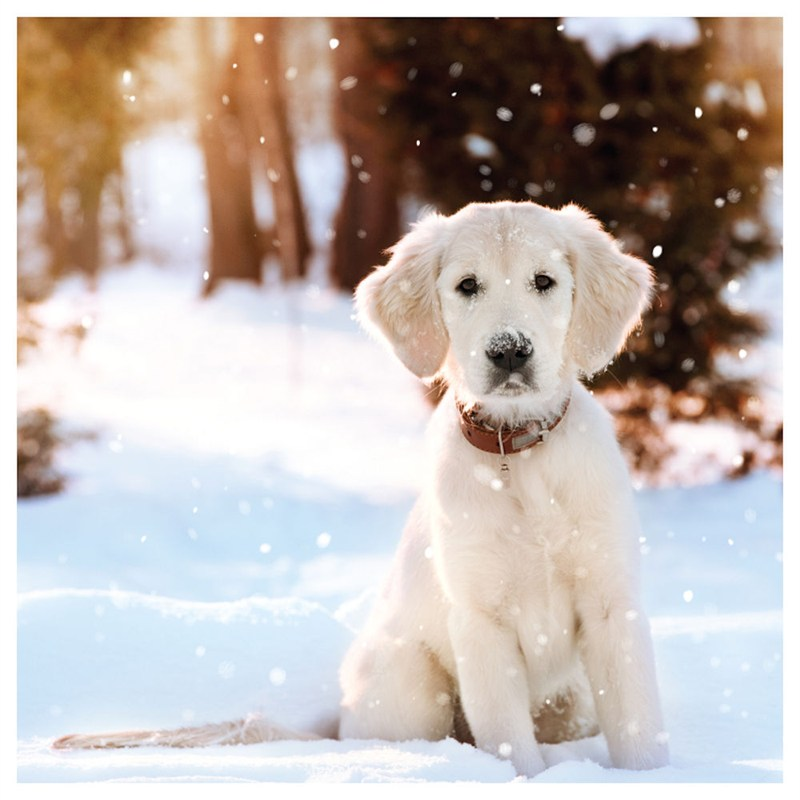 Ling Design Charity Christmas Cards 6 Pack - Dog in Snow (X12233RCJP)