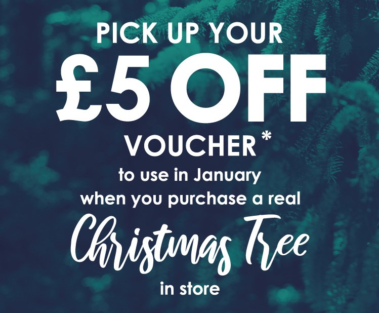 5gbp-off-in-january-when-you-purchase-a-tree-in-store