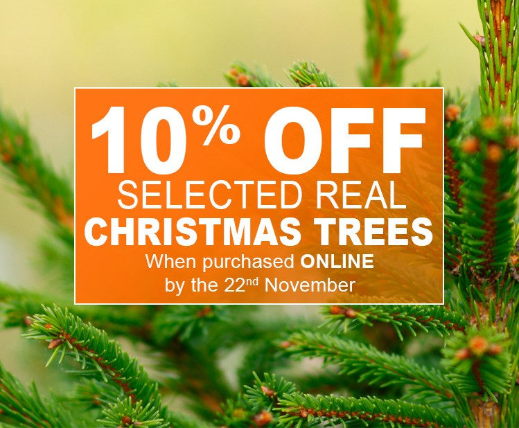 christmas-trees-save-10per-2018