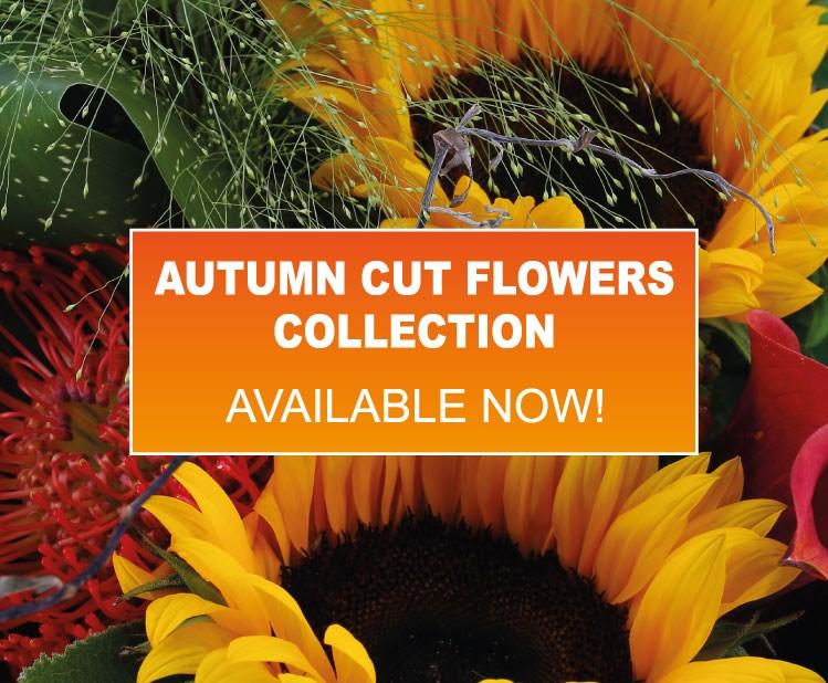 Longacres Garden Centres – Visit our Online Shop for Today's