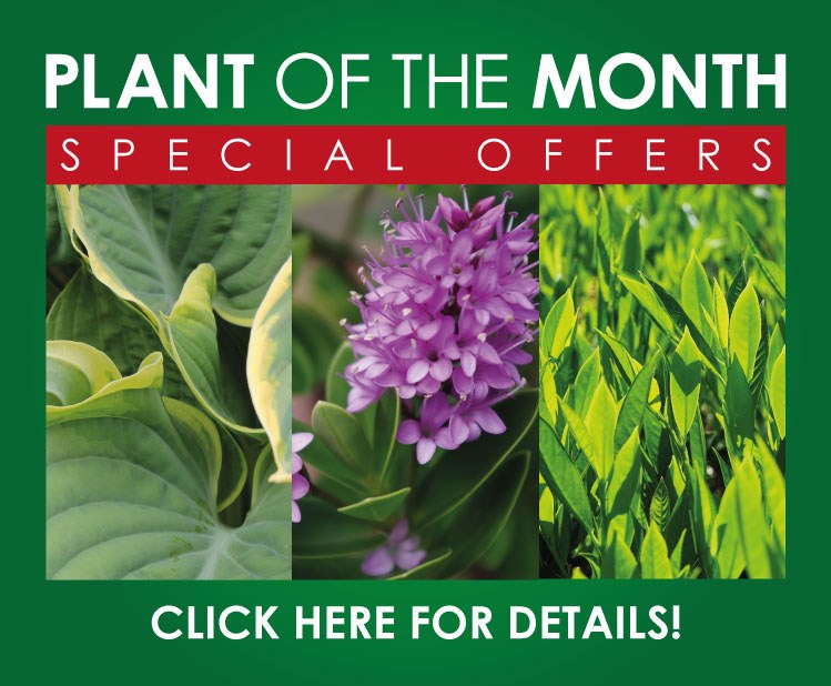 Plant Of The Month August 2019