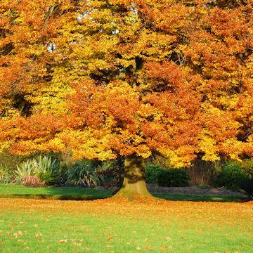 Fall Lawn-Care Secrets   Better Homes & Gardens