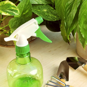 House Plant Care