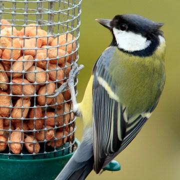 wild bird walmart feeder ip classic pet com perky